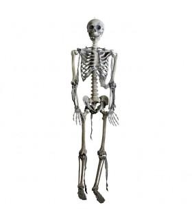squelette articulé, la taille naturelle