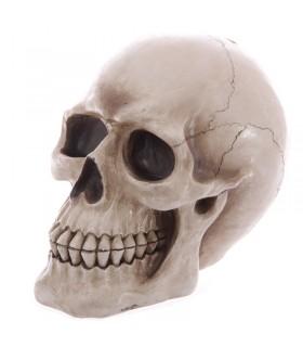 Tirelire Crâne pour enregistrer votre épargne