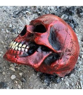 Crâne moyen de la couleur rouge